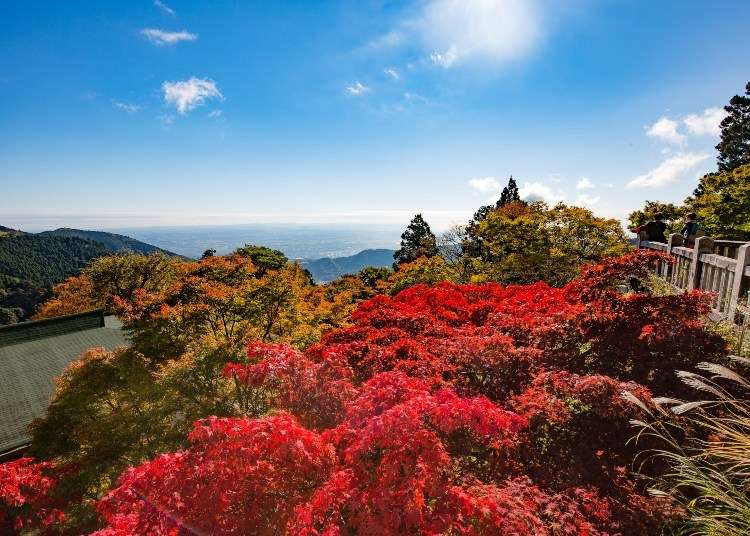 Tokyo Day Trip: Enjoy Spectacular Autumn Leaves & Soothing Hot Springs in Oyama