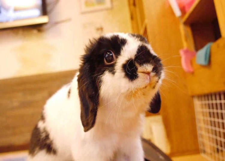 Bonus: You can interact with the mofumofu rabbit at Ra.a.g.f Harajuku!