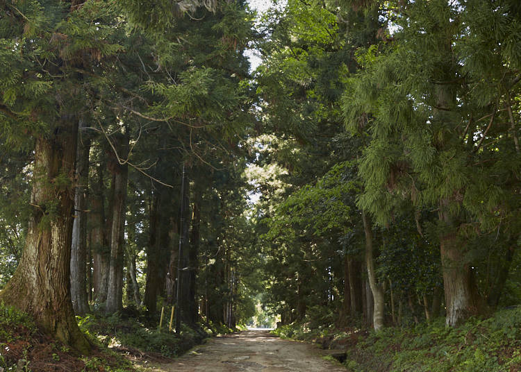■총 길이 37킬로미터에 달하는 닛코 삼나무 가로수길