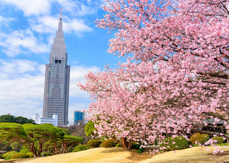 東京都會綠洲「新宿御苑」徹底解析【步行路線說明&必看景點介紹】