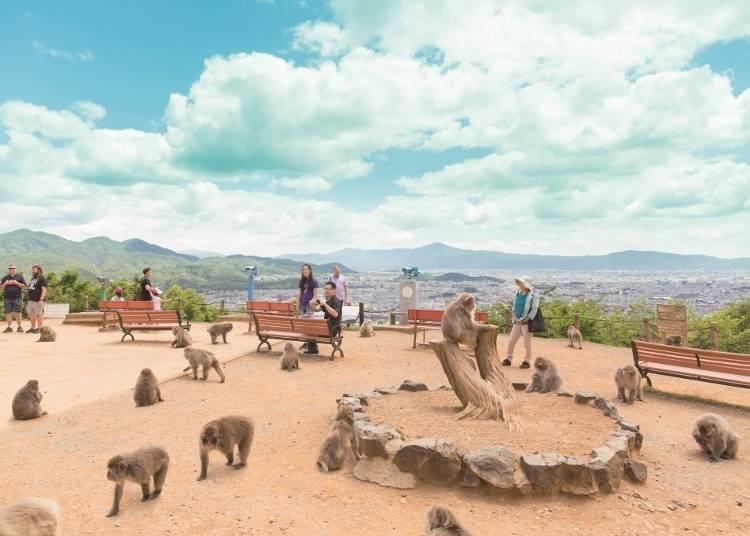 Arashiyama Monkey Park Iwatayama: Let loose with monkeys at the mountaintop