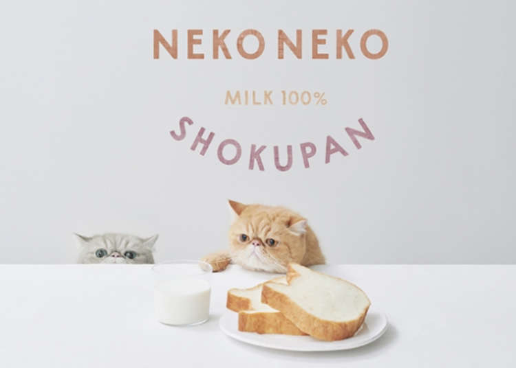Cat-shaped Japanese bread coming to Tokyo!