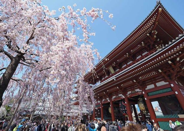 Musim Semi di Taito, Hub Super Populer Sekaligus Rumah Bagi Ueno, Asakusa, dan lain-lain Menyingkirlah ke tempat-tempat tersembunyi dan pilihlah rencana perjalanan untuk satu hari yang sempurna!