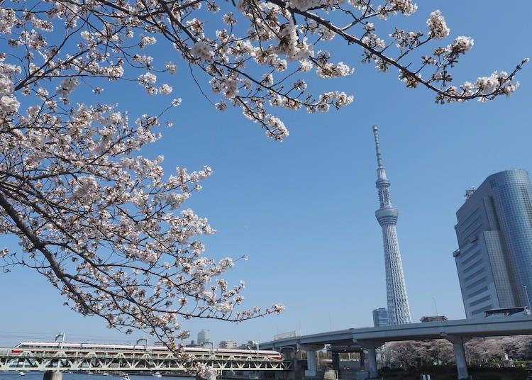 1)スタートはお花見から!浅草のおすすめ桜スポット