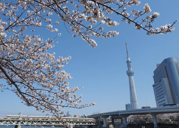 1.以淺草作為旅程的起點!櫻花盛開的淺草地區