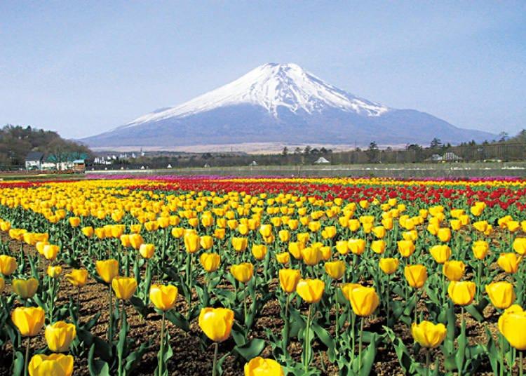 4. 季節ごとの彩りを満喫できる「山中湖 花の都公園」