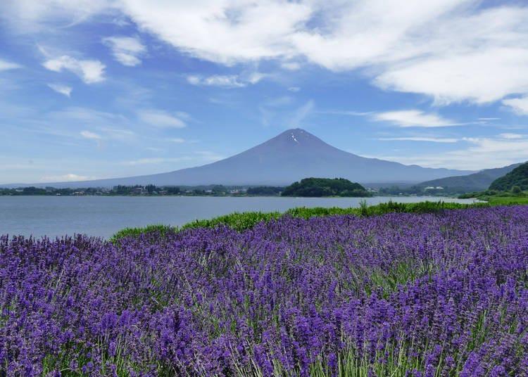 大石公園で河口湖越しの富士山を一望