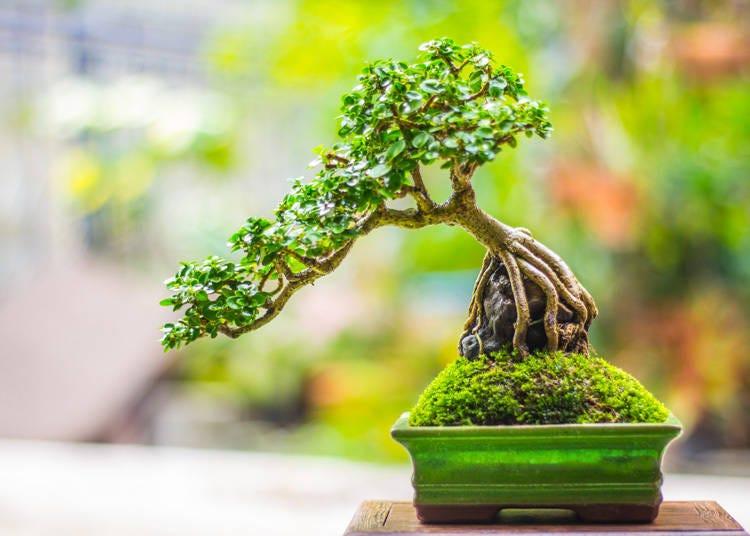 周辺おすすめスポット②盆栽の聖地「さいたま市大宮盆栽美術館」