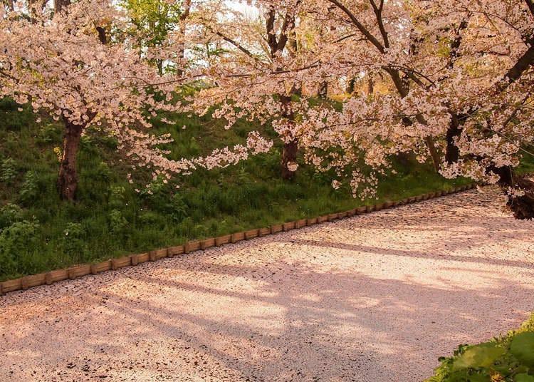 桜が散ってしまうのが寂しい……