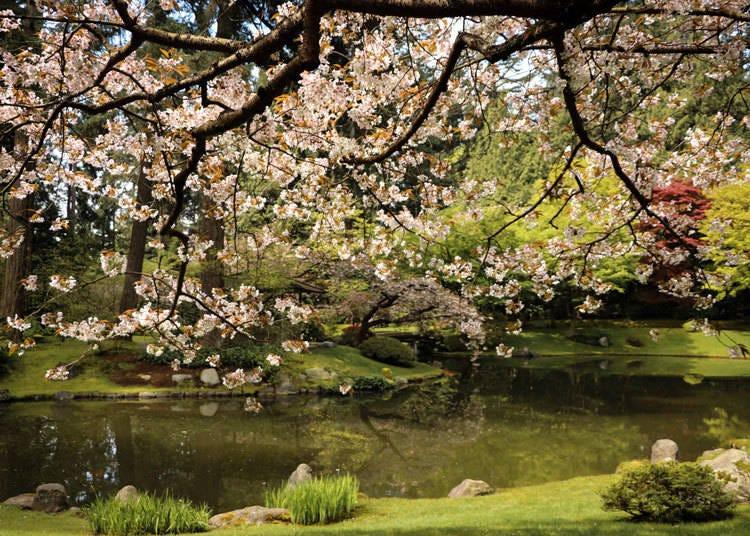 カナダにも桜を見られる庭園がある