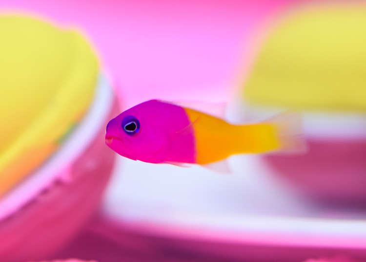生き物がアートに! サンシャイン水族館がフォトジェニックな特別展を開催中