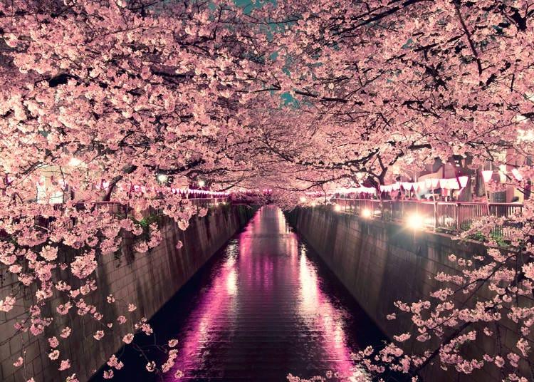 2020年 東京都と各主要都市の開花予報は?