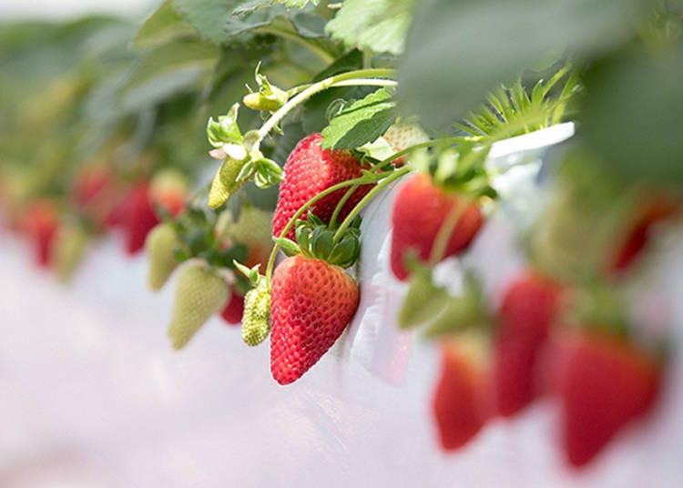 イチゴとチョコのマリアージュが楽しめる期間限定イベント「BERRY HAPPY CHOCOLATE DAY」