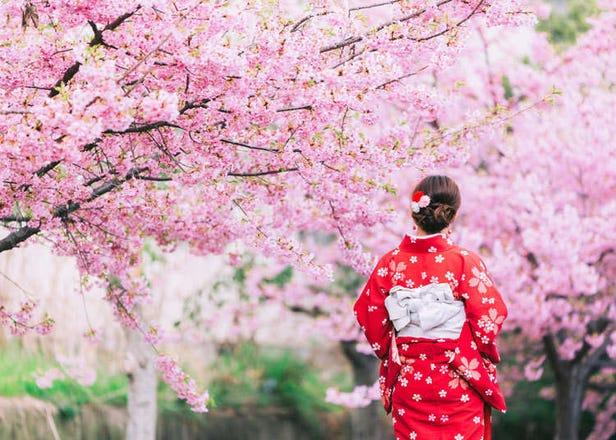 10 Best Sakura Viewing Spots in Tokyo