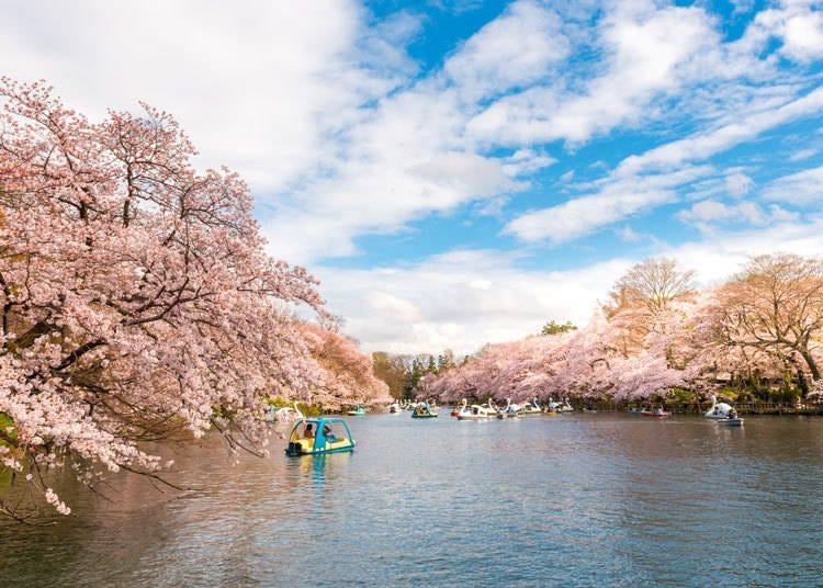 2. Inokashira Park