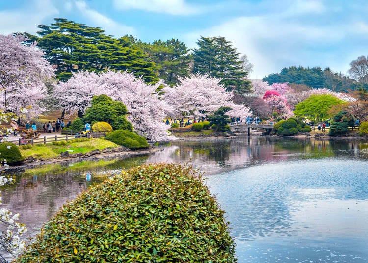 7. Shinjuku Gyoen National Garden