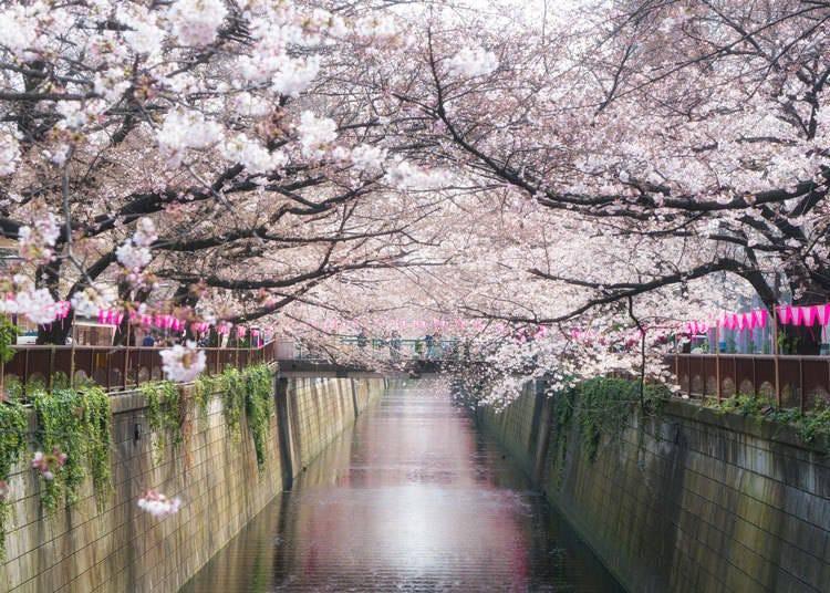 8. Meguro River