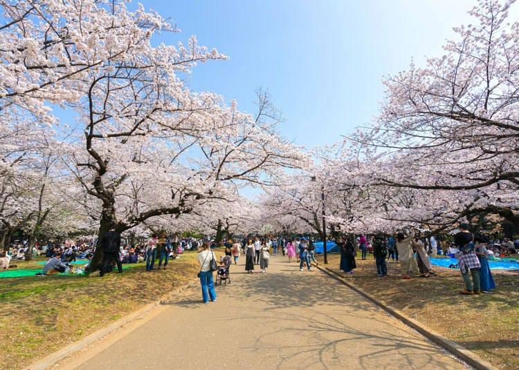 9. Yoyogi Park