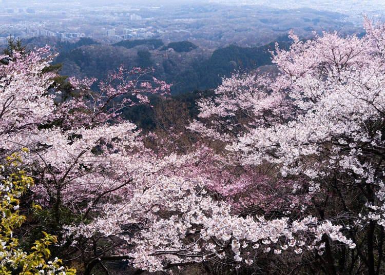 10. Mount Takao