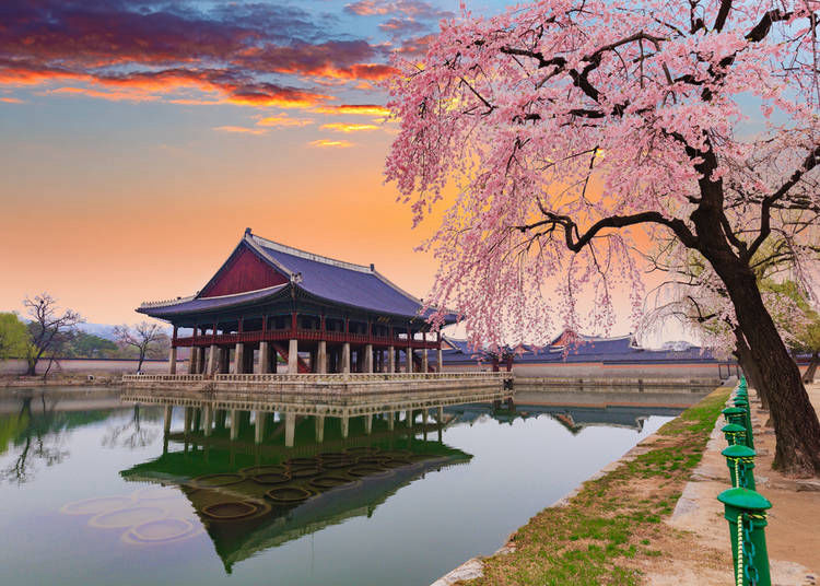 Visiting Japan in April? Take Photos You Won't Believe are Real!