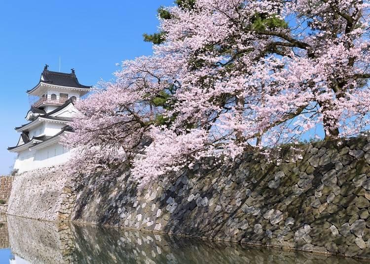 善用方便又划算的巴士,讓日本中部之旅更加自由愉快!