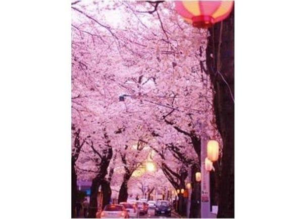 1. Tokiwadaira Sakura Street