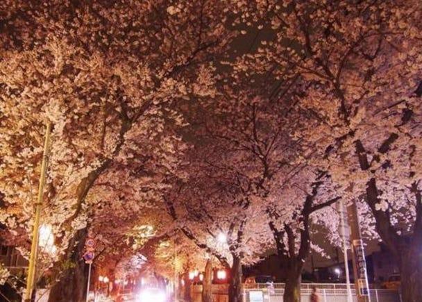 2. Yabashira Sakura Area
