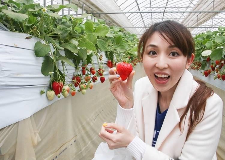 24. イチゴ農園