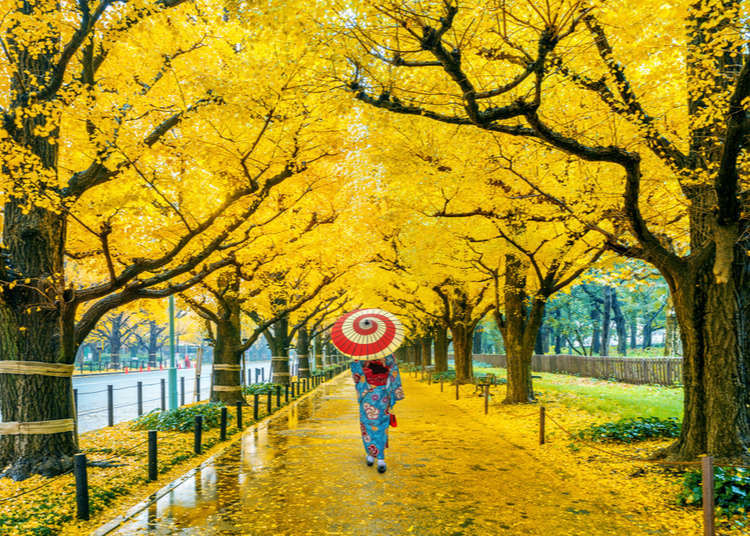 Tokyo in November: Top 10 Things To Do and See Around the City!