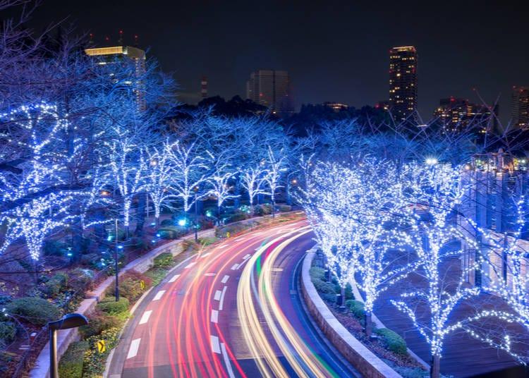 7. Catch Early Winter Illuminations