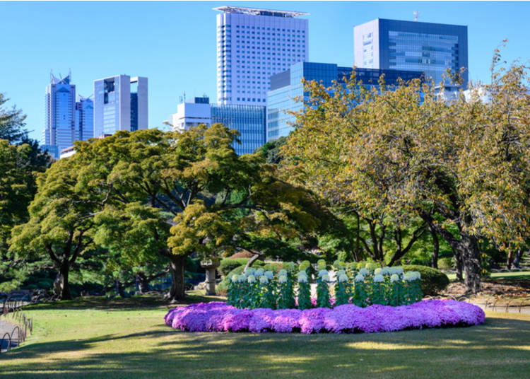 8. See the Chrysanthemums