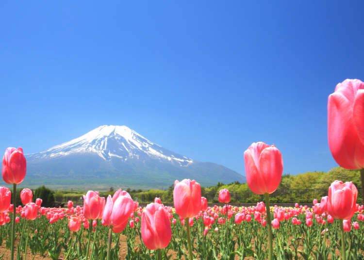 Visit Japan While You're Stuck Home: 5 Breathtaking Places For Your Bucket List!