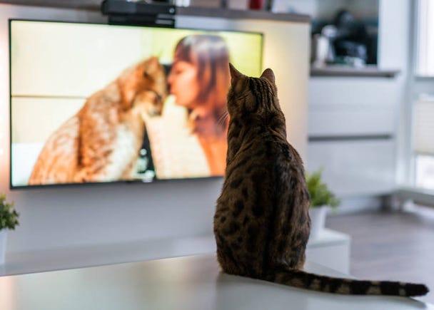 日本のテレビを見ていると「平和だな」と思う