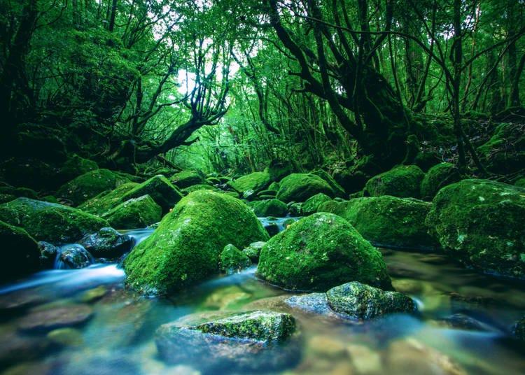 5. 森林浴 Shinrinyoku (n.)
