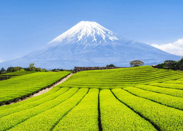 Complete Guide to Visiting Japan in August 2021: Weather, What to See & Do