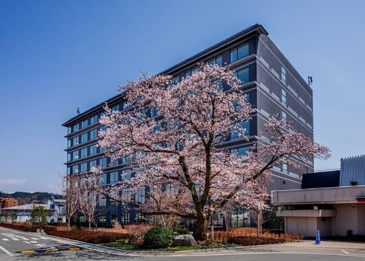 【추천 숙박 장소】천연 온천에서 사계절 절경을 감상할 수 있는 '다카야마 그린 호텔'