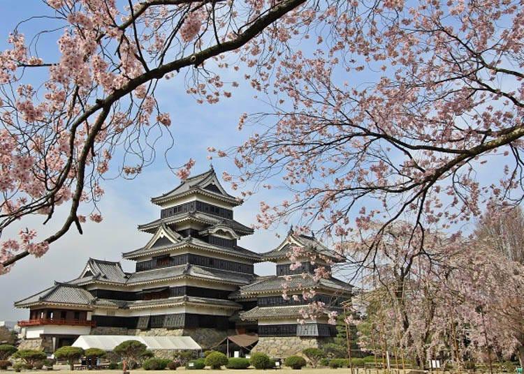 四季松本城-落樱缤纷的春天