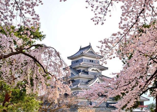 日本中部地区赏樱花景点11选:兼六园、金泽城、松本城