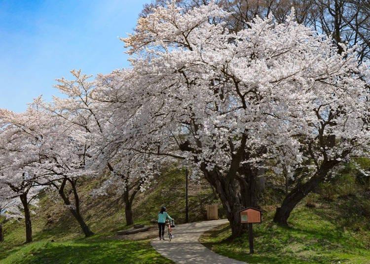 5. Iiyama Castle Ruins Park: Springtime is gorgeous, refreshing and mild