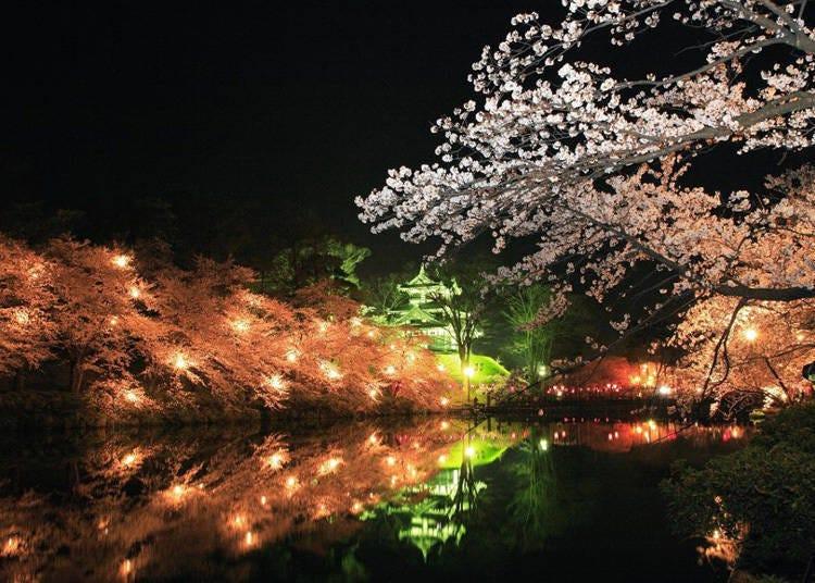 日本中部樱花景点⑦4000棵樱木所打造的日本三大夜樱-「高田城址公园」