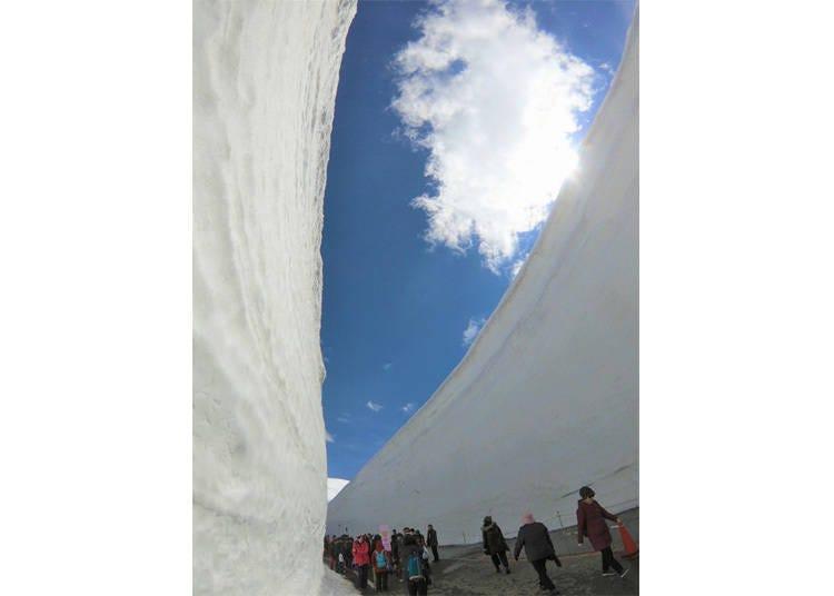 与高耸雪壁零距离接触-来体验立山黑部的「雪之大谷散策」吧!