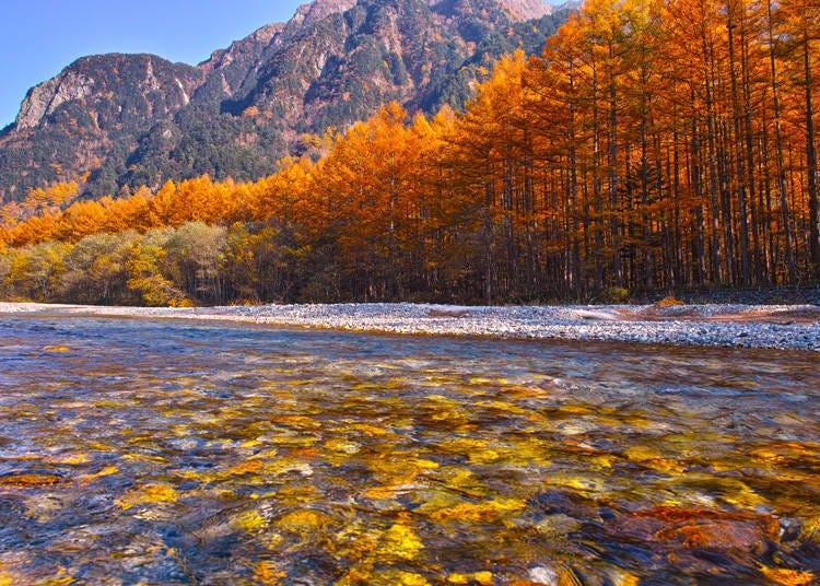 上高地觀光季節③秋季:10月