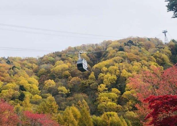 세계유산 '시라카와고'와 신호타카의 단풍을 효율적으로 돌 수 있는 2박 3일 버스여행