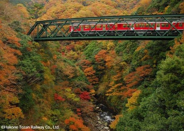 Hakone Tozan Railway: Hakone Tozan Train