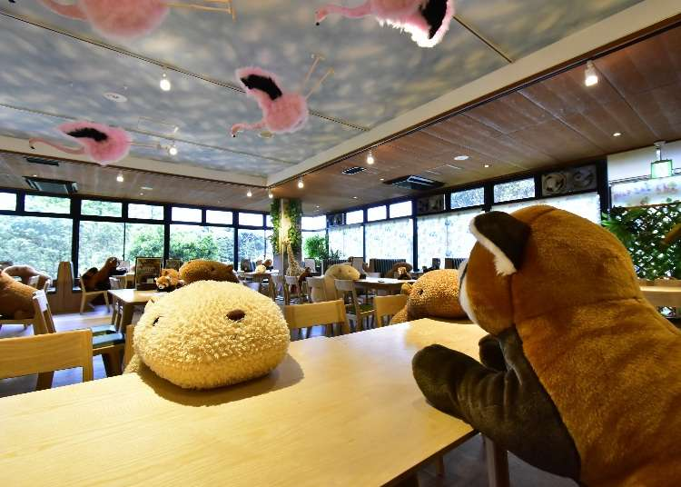 Plushies and Robots! How Japan is Coping with COVID-19 at Restaurants, Hotels and Transportation