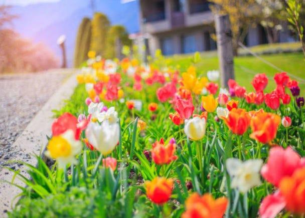 街角に咲く花は、どうしてこんなに美しいの?
