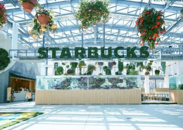 夢幻溫室中品嘗星巴克咖啡!日本讀賣樂園「HANA・BIYORI」星巴克店鋪介紹