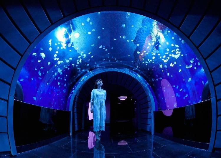 6大水母展區介紹➂被水母360度包圍的水母隧道【翻新】