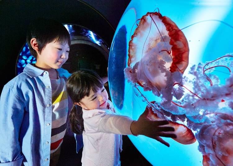 6大水母展區介紹④水母就近在眼前!水母放大鏡【翻新】