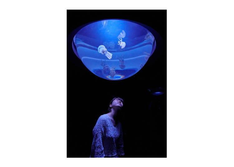 6大水母展區介紹⑤從下往上觀賞水母的水母水滴【翻新】